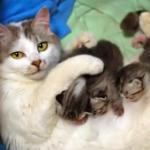 もうどうにでもなれ…!?授乳に疲れきって悟り顔な母ネコたち特集♪
