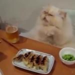 おバカで笑えるネコの動画まとめ♪ニャ~にやってるんだかwww