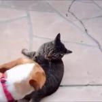 猫と犬のケンカ映像集。でも実はとっても仲良し?