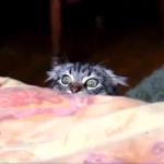 ( ゚д゚)ハッ!見られてた!!知らないうちにものすごくこちらを見ている猫の表情が面白い♪