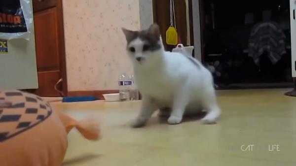 びっくりしたニャ~!リアクション芸人な猫たち