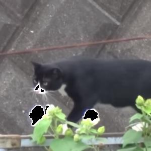 どんくさくてカラスにまでバカにされる猫が可哀そうで可愛い(´・ω・`)