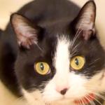 お湯がなければ快適だニャン♪お風呂場で遊ぶ猫が可愛い(*^^*)