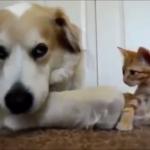 可愛い猫と犬の仲良し動画特集♪(*´艸`*)