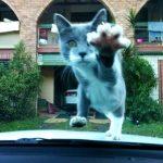 【にゃイスタイミング☆】猫ちゃんの決定的瞬間をとらえた画像集!!