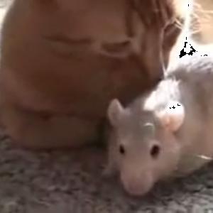 実写版トムとジェリー♪仲良しすぎる猫とネズミがどっちも可愛い♡