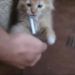 何やってるの!?自分を噛んだり、喫煙まで!?意味不明な動きをするちょっと変な猫たち