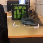 【爆笑】やっちゃったニャン(´・ω・`)笑える猫の失敗集( ´,_ゝ`)