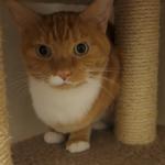【音量注意】火災報知器の音にビビリまくる猫たちがカワイイ♪