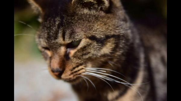 【仁義なき戦い!?】人相ならぬニャン相が悪い猫たちが面白いけど恐い(-_-;)
