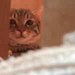 影からこちらをじーっと。見つめてくる猫が不気味可愛い(笑)