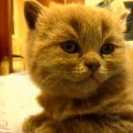 注目!可愛すぎる猫の映像集♪猫の仕草に胸キュン(*´艸`*)