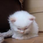 もうだめだニャ……(´・ωゞ)眠りに落ちる子猫たちが可愛すぎ(*´艸`*)
