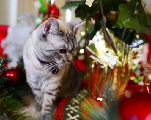 【そろそろ準備したい♪】ネコ好きのあの人へ贈りたい猫モチーフのプレゼント