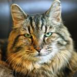人間なら120歳超!?世界最高齢の猫がイケメンすぎて凄いwww