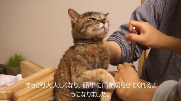 爪切り嫌いな猫を一瞬で大人しく安全にする方法♪これは凄い…!
