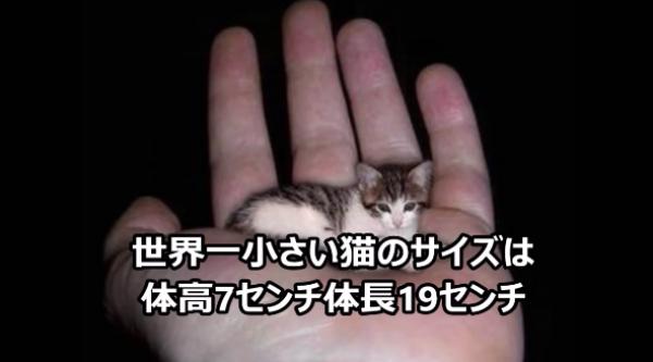 知ったら面白い猫の雑学♪猫が本気で走ったらどうなるか…知ってる?
