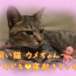 ドキドキ☆ネコのウメちゃんに寝起きドッキリを仕掛けてみたよ♪