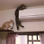 絶体絶命のピンチ!エアコンの上から降りられなくなった猫「見てないで助けてニャ」