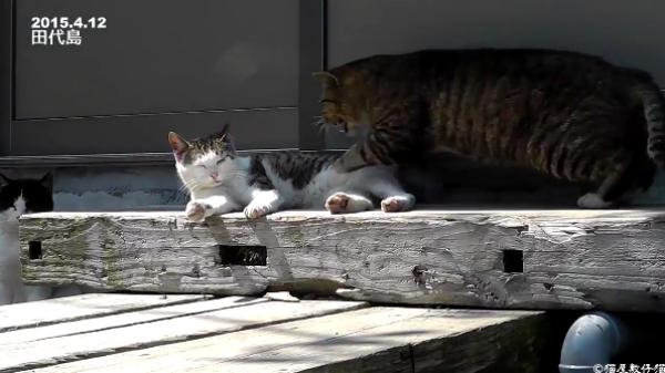 猫たちの三角関係な恋愛事情…!?しつこい男は嫌われちゃうんだから!