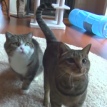 「あれ?何処に投げたニャ?」おやつを投げたフリに騙される猫がおバカで可愛すぎる♡