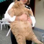 お前ら本当に猫かよw太りすぎて巨大化してしまった、自称「猫」たちwww