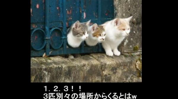なんで(笑)狭い所があったらとりあえずハマっておくスタイルなネコたちwww
