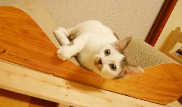 ソファ型爪とぎ「ガリガリソファ」を買ってみた♪猫たちは喜んでくれるかな??