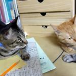 「リア充爆発しろニャ…」ラブラブな2匹のそばで目のやり場に困っている猫www