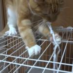 遊んでいたら大惨事に!紐が大好きすぎて大興奮なネコちゃんの末路がこれ…!