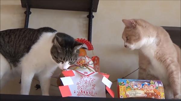 大晦日は猫とまったり♪来年も良いお年を!