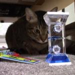 時は金ニャり!?3分タイマーに夢中な猫の視線が可愛すぎ♪