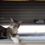 「あっ、逃げやがった!」喧嘩っぽいことをしていたときの猫の表情が面白い♪