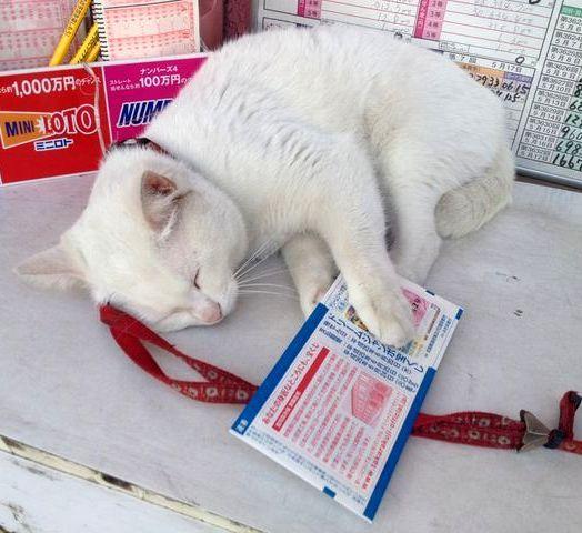 【年末ジャンボはここで!!】リアル招き猫「マコちゃん」を撫でて高額当選願おう♪