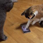 便利だニャン!猫もスマホを使いこなす時代が到来!?