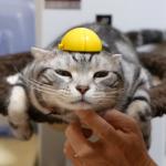 「僕ドラえもんです!」リアル猫が猫型ロボットに変身!?
