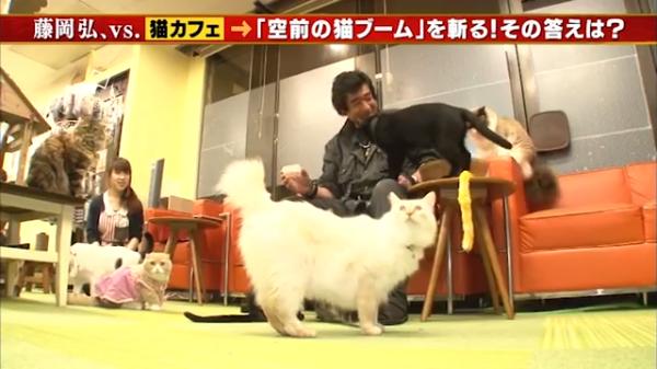 藤岡弘、さんVS猫。硬派な俳優さんも猫にメロメロ?