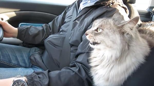 気ままな猫を乗せて、気ままなドライブはいかが!?