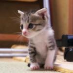 可愛すぎる猫の成長期♪子猫が大人に成長するまでの1年に密着!