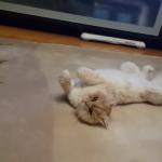 【検証】「猫が喜ぶ音楽」を猫に聞かせてみた!気になる反応は…??