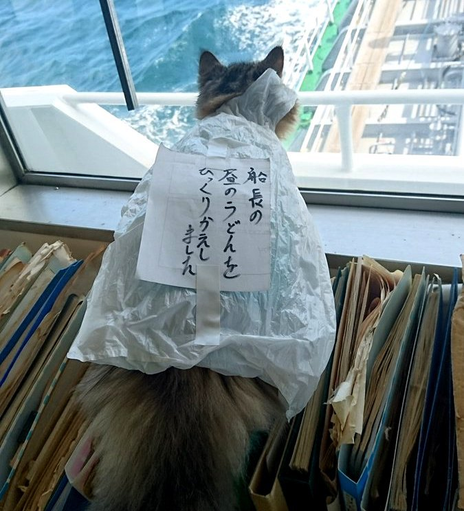【あなたはいくつ知っている?】今年Twitterで話題になった猫画像を一挙ご紹介