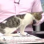 放送事故発生!スタジオに猫が乗り込んでとんでもニャイことに!?