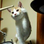 【虎徹は1歳に・・・】ビジュアル系バンドマン煉さんと猫ちゃんのコンビのその後が気になる♪