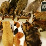 【10catsと迷い猫の物語】10匹の猫が暮らす家に迷い猫がやってきた!