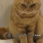 「欲望の為なら頑張れるニャ!」ひたすら頑張り続けるネコの姿が可愛すぎる♪