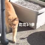 「ただいま~♪」散歩から帰ってくると必ず帰宅の報告をしてくる猫が可愛い♡