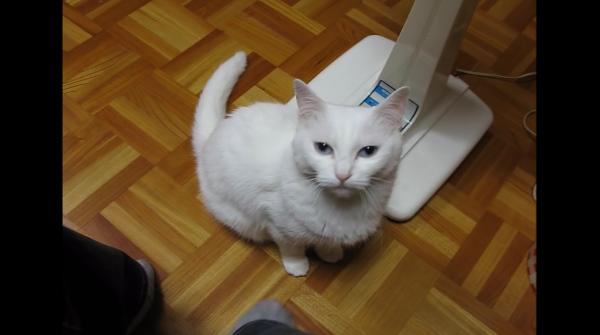 さりげない仕返しwうちの猫…足を踏まれるとそっと踏み返してくるんだけどwww