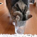 猫にも利き手ってあるのかw利き手を調べる実験をしてみた結果がこれwww