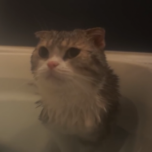 「お湯少ないんですけど!?」湯船の湯量が満足できなくてメッチャ文句言うネコwww