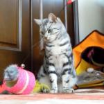 この恨み、晴らさでおくべきか…!遊び中の誤爆に相当ムカムカしていたらしい猫ww